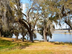 Spanish Moss and trees