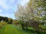 Wolf Creek Path Spring 2013