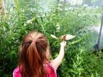 Caitlyn Butterfly