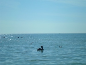Gulf of Mexico and pelican